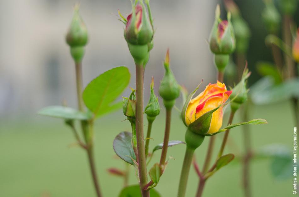 аватарка цветок: