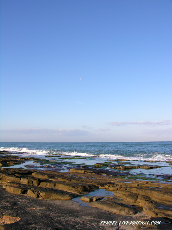 ISRAEL SPRING RENEDL 12