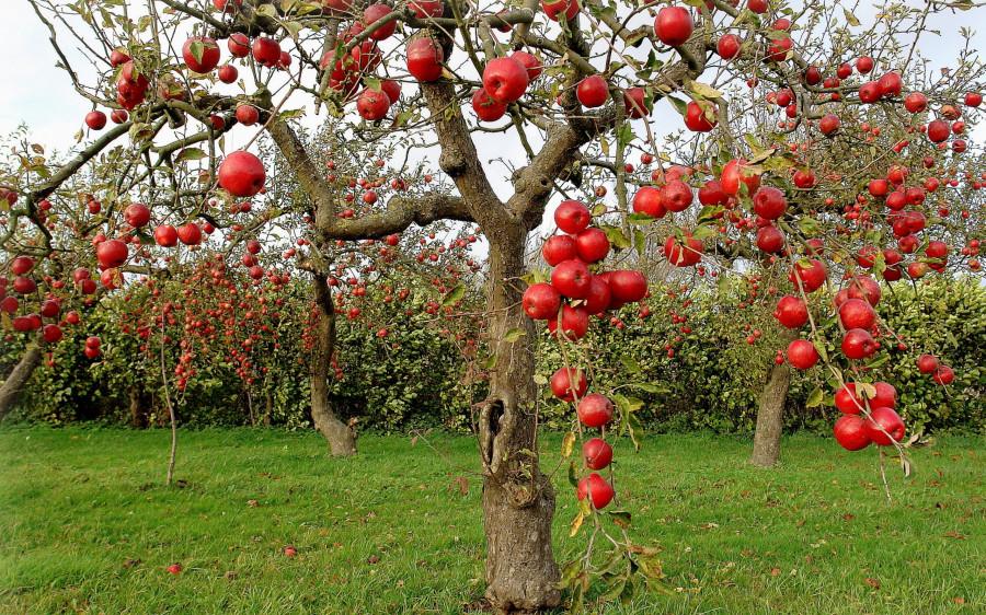 Nature_Seasons_Autumn_Autumn_Red_Apples_034850_