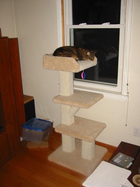 New Cat Toy