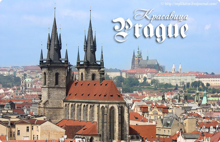 Чехия картинки с надписью, цветы