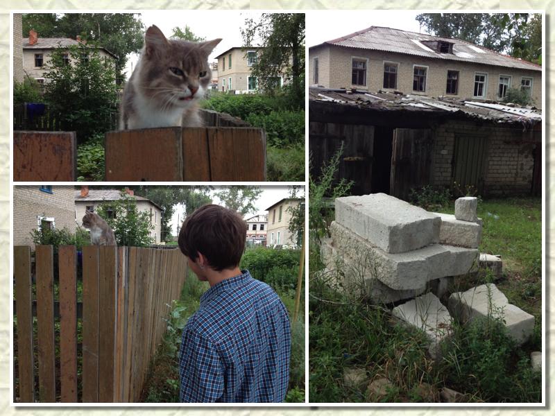 силикатный кот