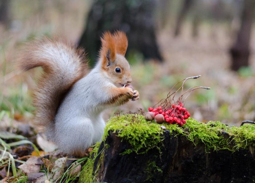 500px : Squirrel by Denis Shumakov 2013-10-27 19-58-58