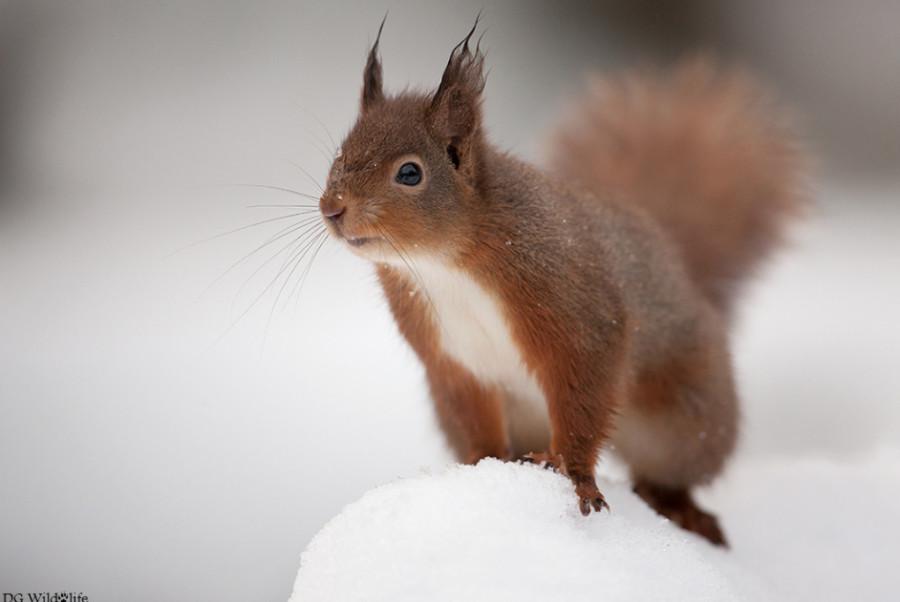 500px : Curious Squirrel by Giedrius Stakauskas 2013-12-15 01-05-58