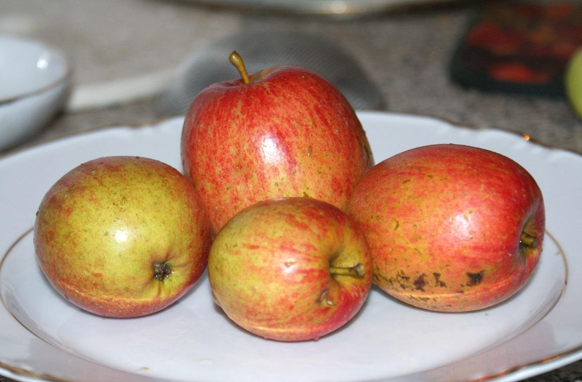 яблоки овальные