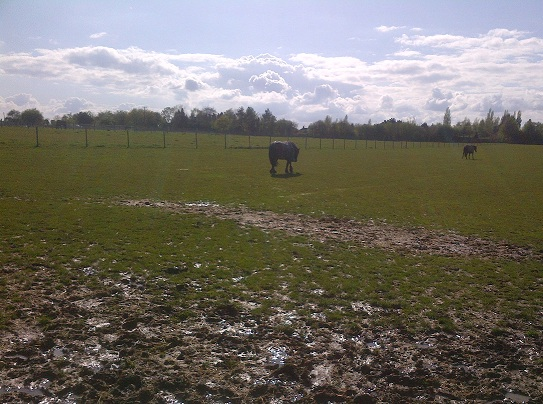 Mud and horses, or how I spent my afternoon.