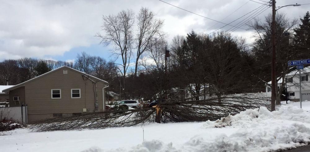 crashed tree