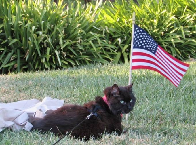 Morgan-Flag