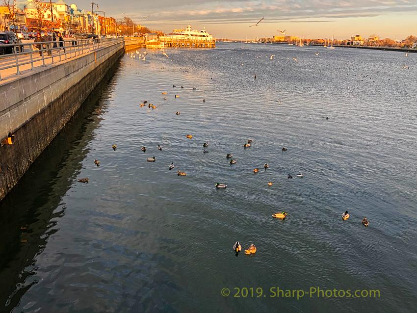 Птицы 190311_183019_IMG_1696_Luminar2018-edit.jpg