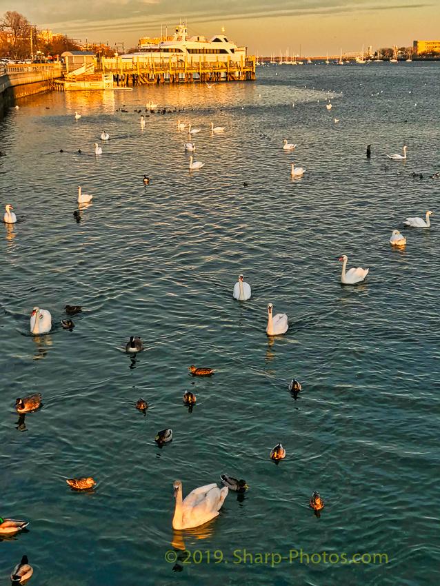 Птицы 190311_183546_2019-03-11 15.35.45_Photolemur3_Processed_Luminar2018-edit.jpg