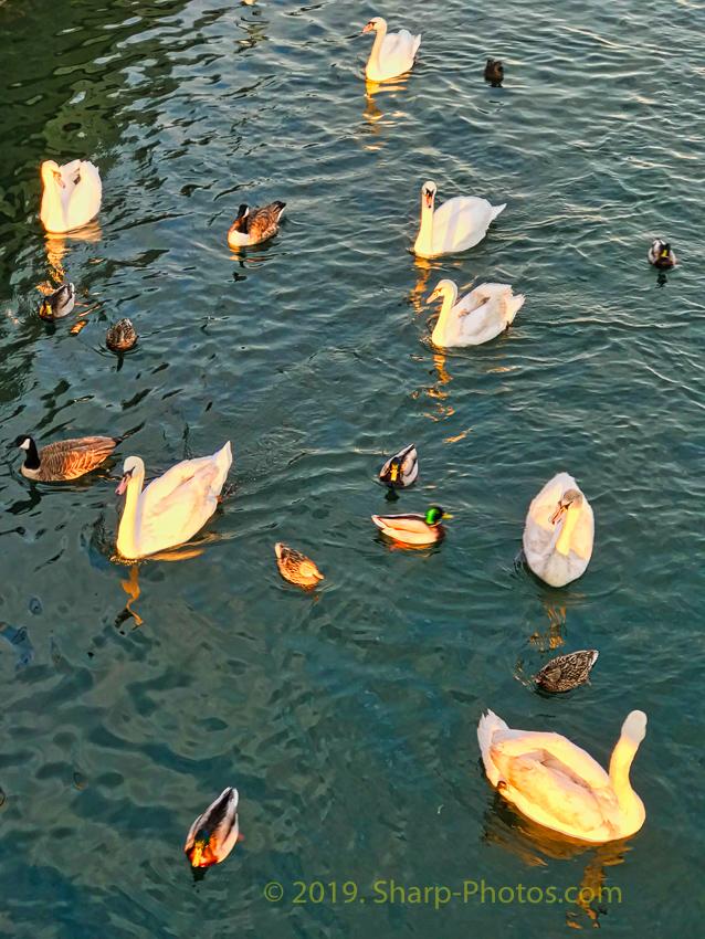 Птицы 190311_183559_2019-03-11 15.35.58_Photolemur3_Processed_Luminar2018-edit.jpg
