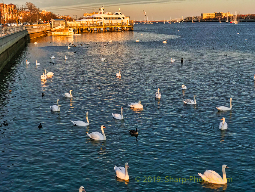 Птицы 190311_183626_2019-03-11 15.36.26_Photolemur3_Processed_Luminar2018-edit.jpg