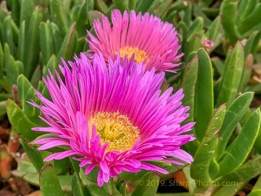 На ковре из цветов