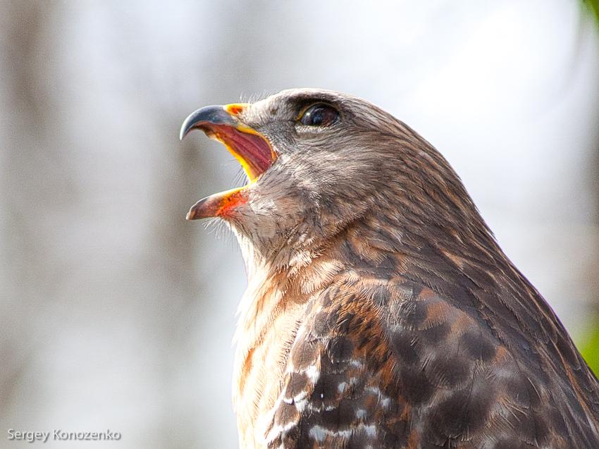 Из жизни птиц и людей