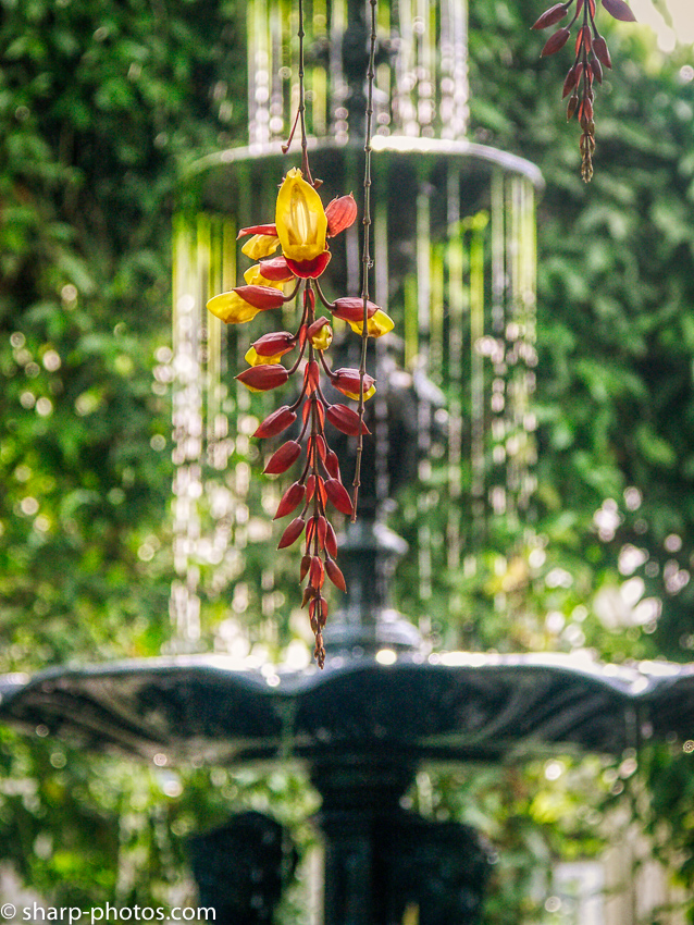 PICT1150_AuroraHDR2019-edit.jpg