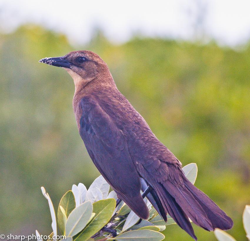 Птичка без имени