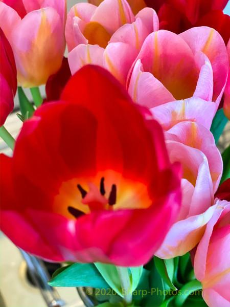 200217_091908_2020-02-17 09.19.07_Luminar4-edit.jpg