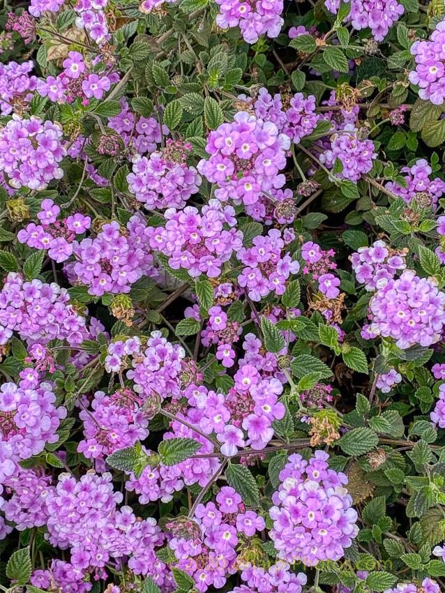 200308_172638_2020-03-08 17.26.38_AuroraHDR2019-edit.jpg