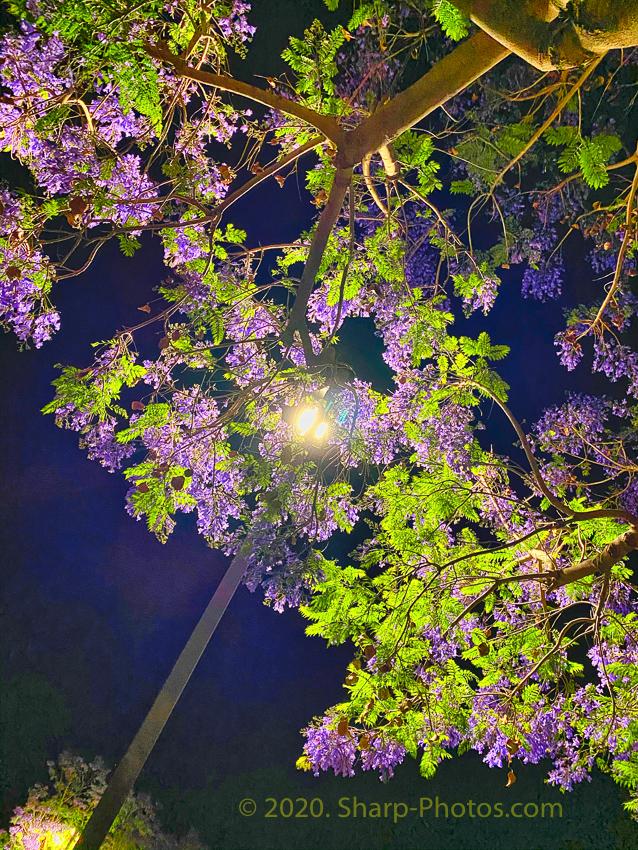 200526_233037_IMG_5646_Luminar4-edit.jpg