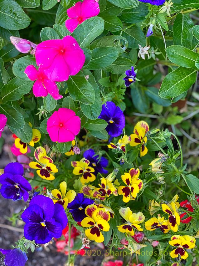 200715_194237_2020-07-15 19.42.37_Luminar4-edit.jpg