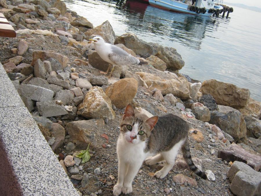 seagull-cat
