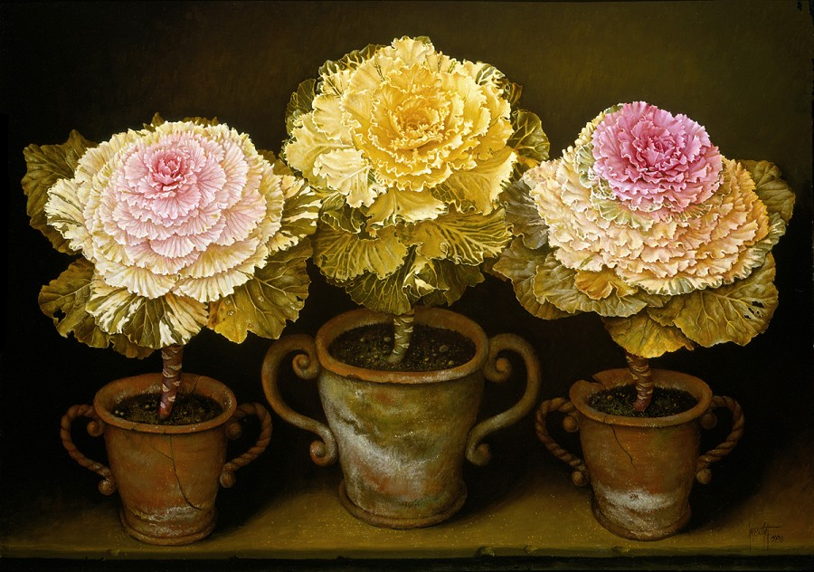 POTTED ORNAMENTAL CABBAGES 66x91 cms oil on canvas 1993(1)