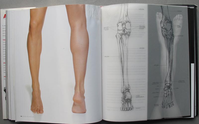 Must read — анатомия для художников сары симблет — делюсь находкой.