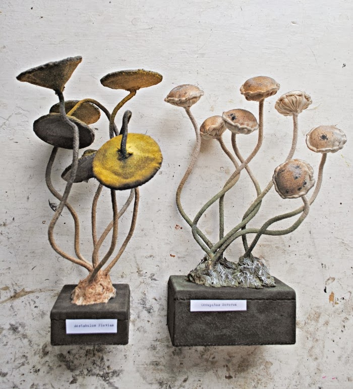 toadstools on base small 5