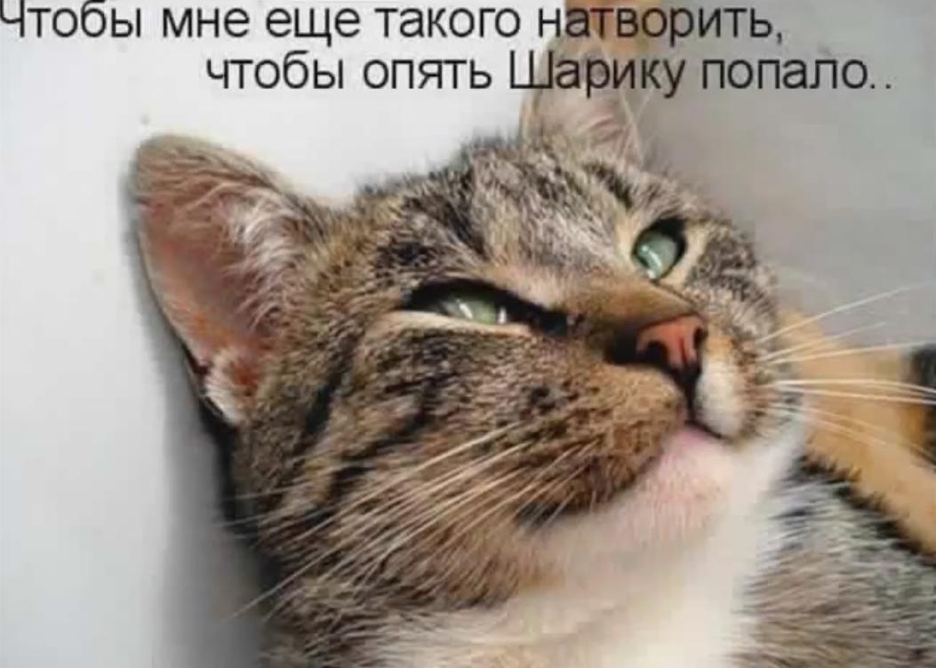 Безразличия, смешные картинки с надписями без котов