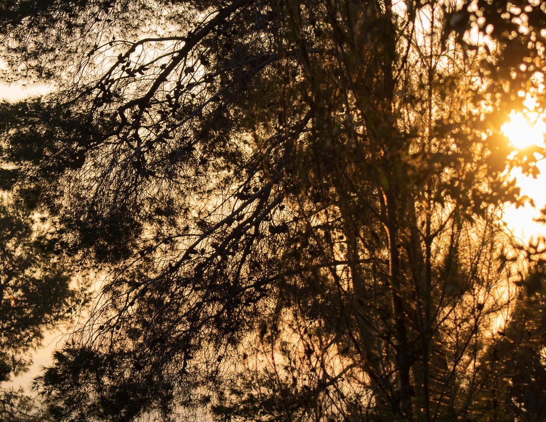 Park_Jerusalem_012.jpg