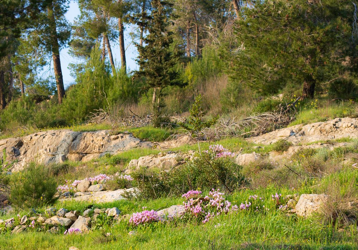 Park_Jerusalem_016.jpg