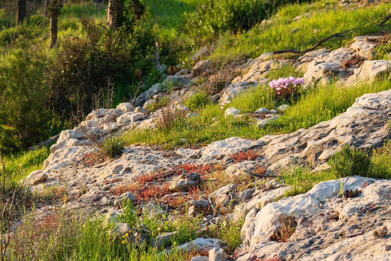 Park_Jerusalem_025.jpg