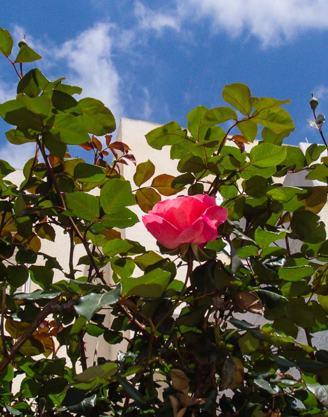 30_03 цветущий понедельник 30_03_001.jpg