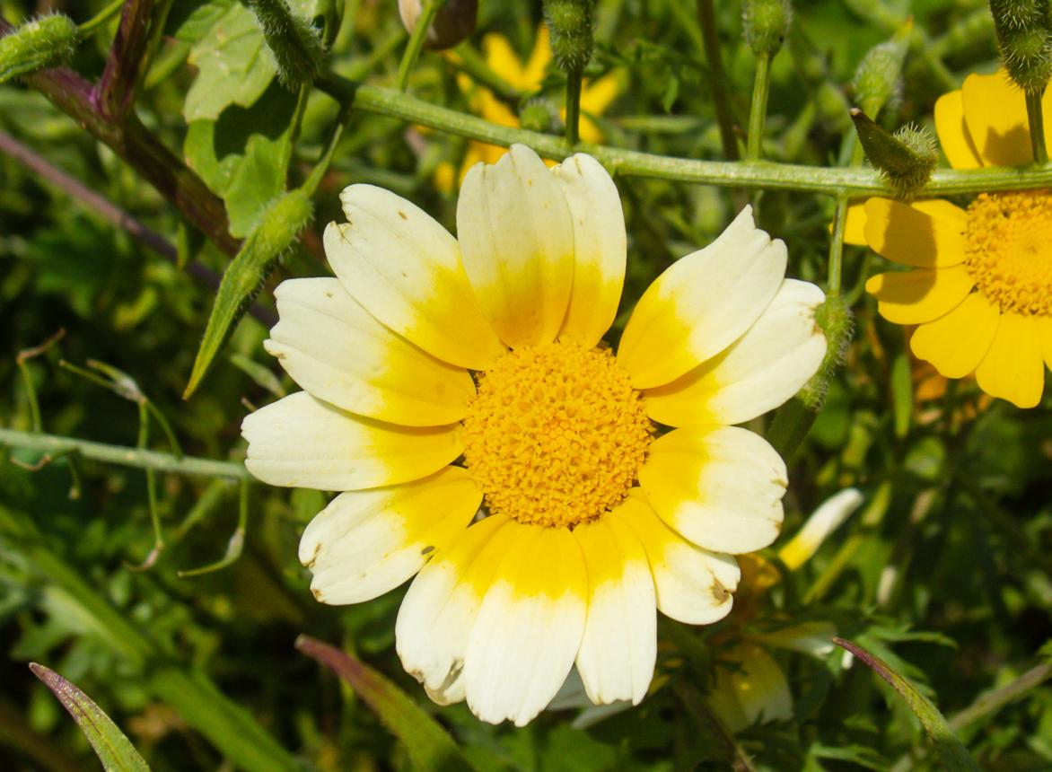 30_03 цветущий понедельник 30_03_015.jpg
