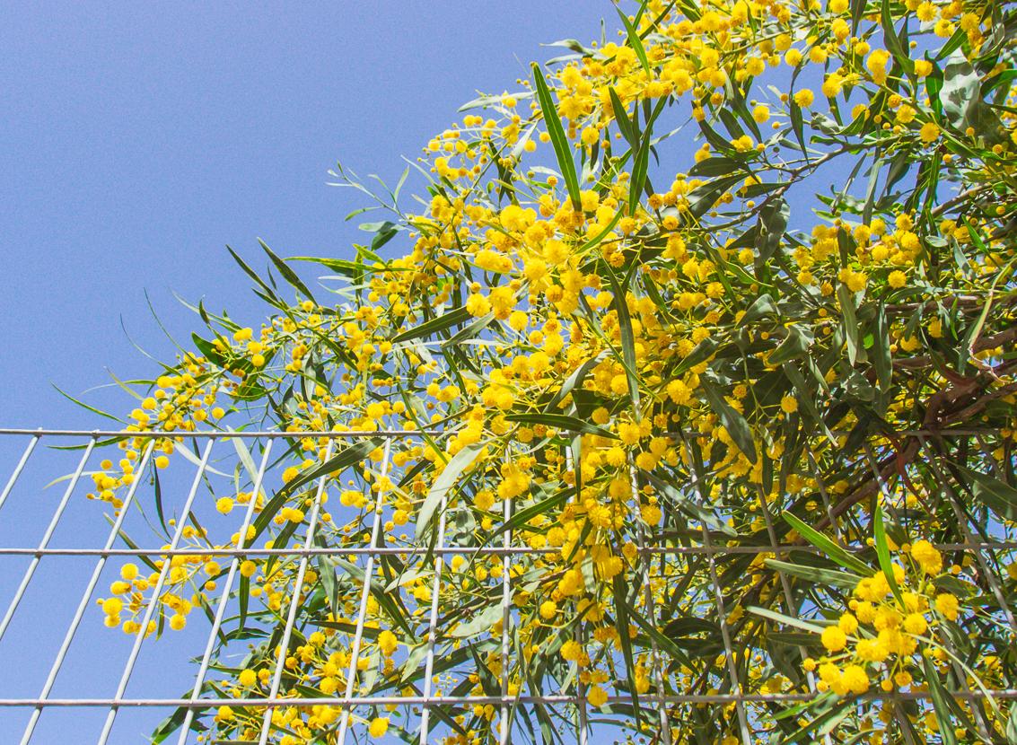30_03 цветущий понедельник 30_03_020.jpg