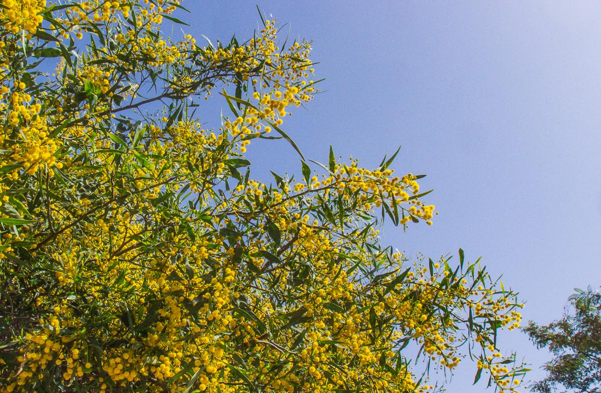 30_03 цветущий понедельник 30_03_023.jpg