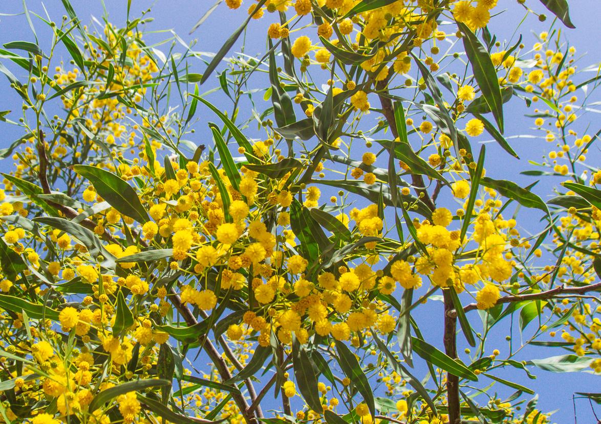 30_03 цветущий понедельник 30_03_025.jpg