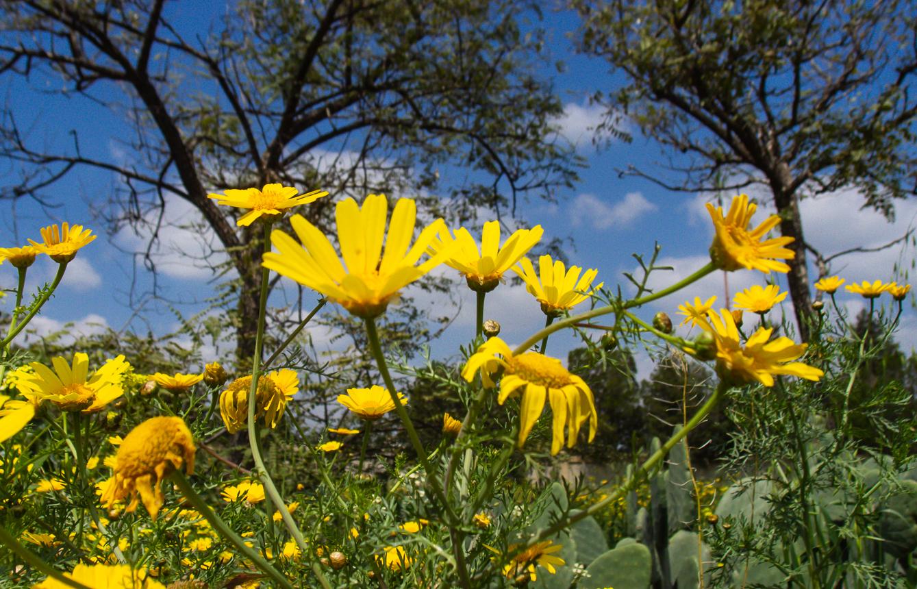 30_03 цветущий понедельник 30_03_029.jpg