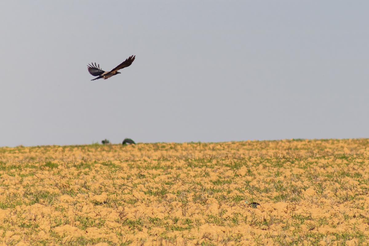 Bird_Arad_008.jpg