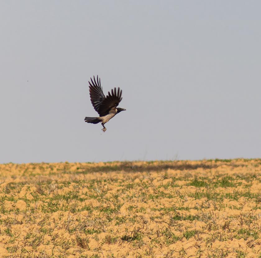 Bird_Arad_010.jpg