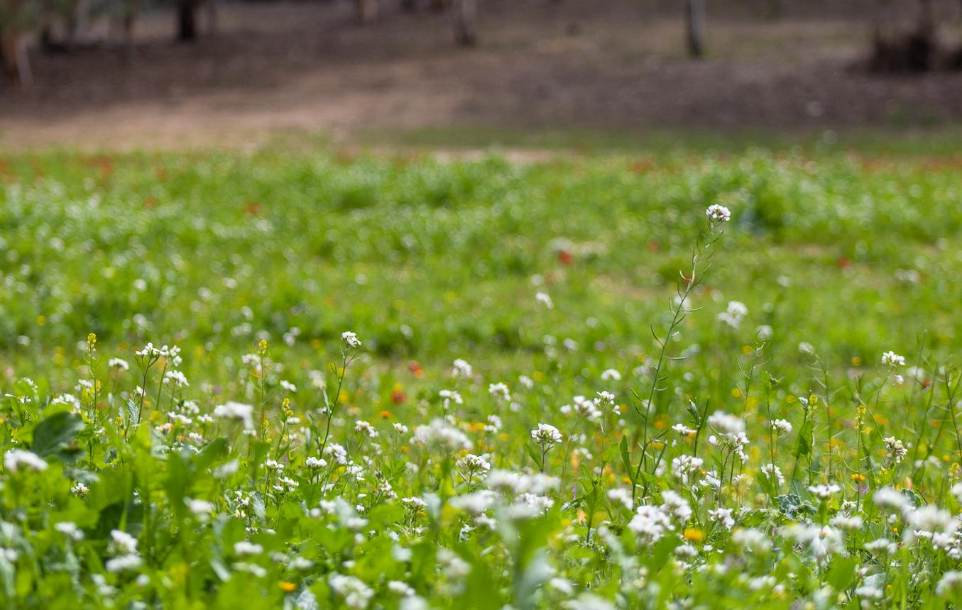 Белый, красный, лиловый на зеленых полянах zeleno_051.jpg