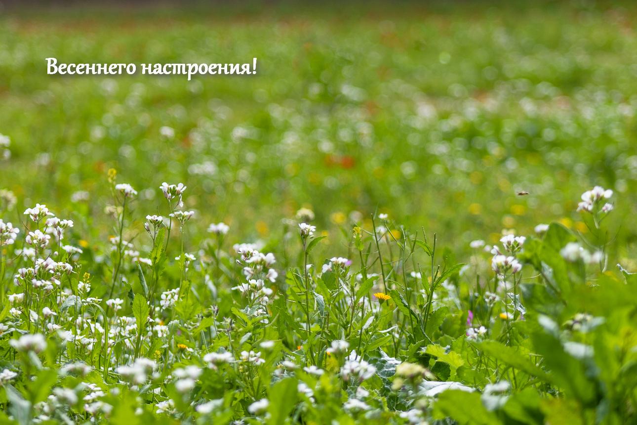 zeleno_061.jpg
