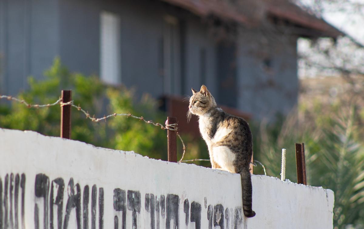 Cat_003.jpg