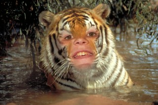 Matthew the Tiger