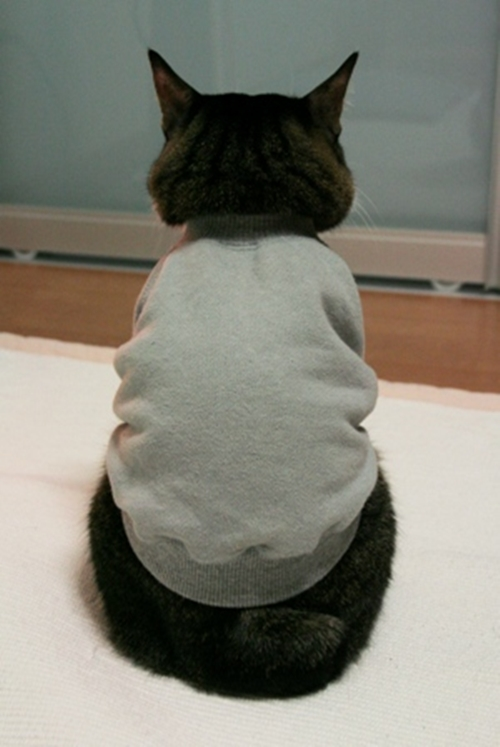 Кот разодрал спину