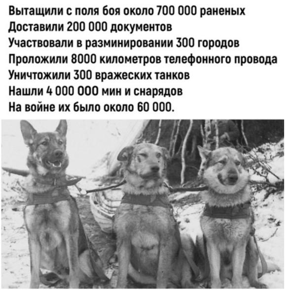 https://ic.pics.livejournal.com/rivka381/15011302/431896/431896_600.jpg