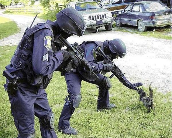 SWAT-Kitty