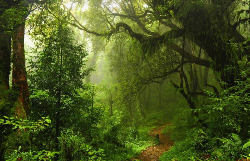 джунгль.jpg