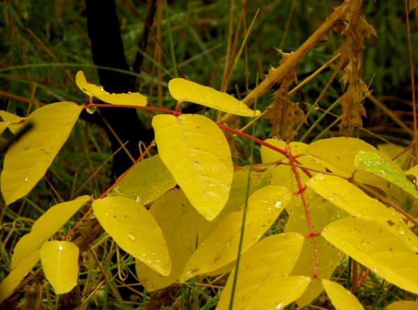 water on leaves1