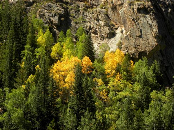 leaf contrast
